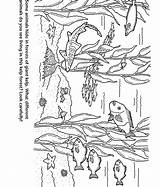 Forest Kelp Coloring Pages Aquarium Bay Monterey Colouring Animal Template Simple Jungle Easy Marine Tree Sketch Christmas Forests Crafts Montereybayaquarium sketch template