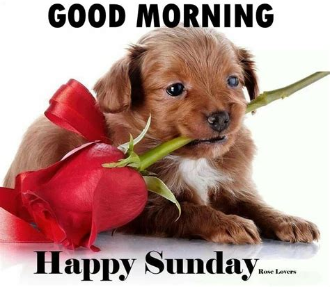 morning happy sunday pictures photos and images for and