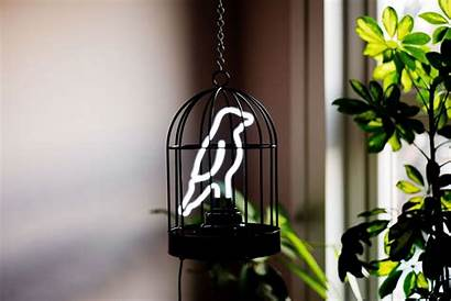 Neon Cage Bird Gnr8 Biz