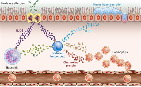 basophils     key drivers  allergy induced