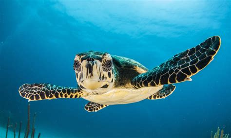 Can Led Lights Save Sea Turtles Magazine Articles Wwf