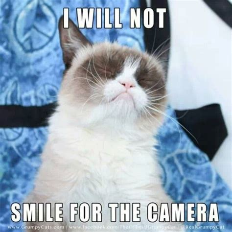 Make Your Own Grumpy Cat Meme - 1101 best grumpy cat fans memes images on pinterest funny kitties grumpy cat and funny stuff