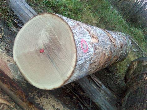 white oak logs