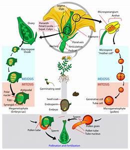 Science  An Elementary Teacher U2019s Guide  Plants