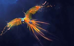 Parrot Splash Art Wallpapers HD Wallpapers ID #25597