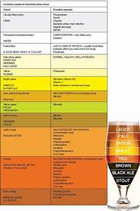 Stout  Pilsner Or Ipa  A Craft Beer Review Of Urine Colour