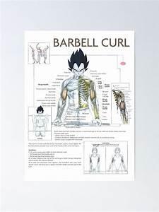 U0026 39 Anatomy Chart - Muscle Diagram