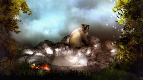 fantasy cat wallpaper  desktop downloads