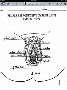 Female Reproductive System Diagram Se
