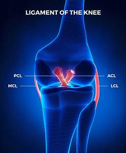 The Quick Guide To Understanding How Your Knee Works