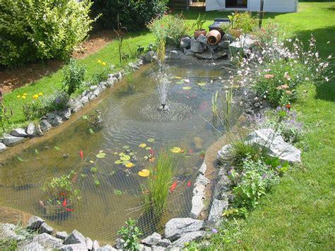 poisson de bassin de jardin bassin de jardin