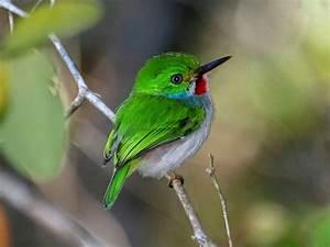 ஜ۩۞۩ஜ Azulestrellla ஜ۩۞۩ஜ: Imágenes de bellas y exóticas aves
