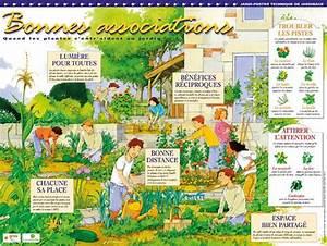Plantes Amies Et Ennemies Au Potager : compagnonnage au potager les fleurs amies de nos l gumes ~ Melissatoandfro.com Idées de Décoration
