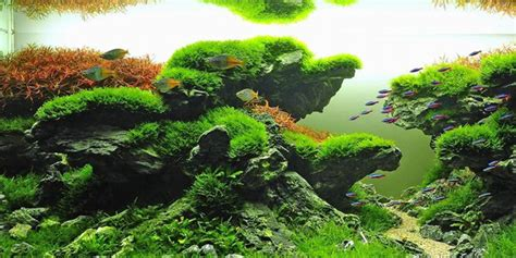Aquascapes Aquarium by Understanding Taiwanese Aquascaping Style The Aquarium Guide