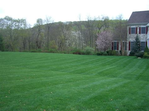 hydro seed grass thorough reliable friendly working hard to be a different kind of lawn care and landscape company