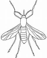 Coloring Insect Colouring Topcoloringpages Insects sketch template