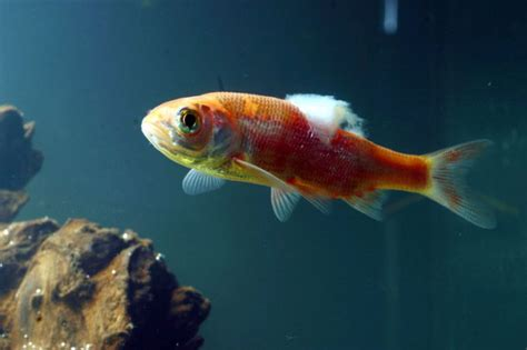 frequently asked questions  treating sick fish