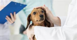 How Far Can You Go In Treating Canine Kidney Disease