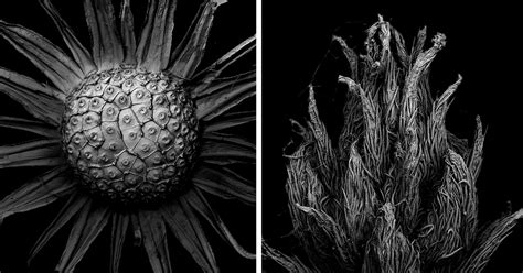 decaying plants  captured   scanning electron