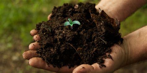 Soil As Medium For Growing Cannabis Plants