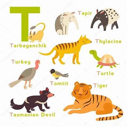 Animals Letter English Illustration Begin Alphabet Vector