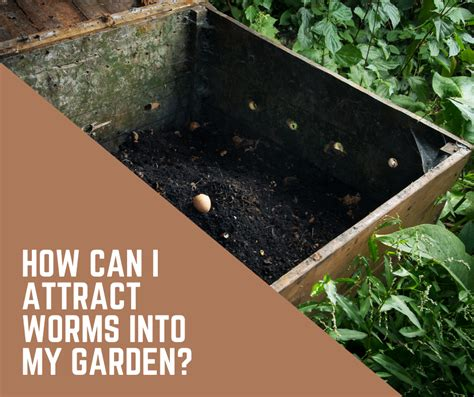 garden worms vegetable bad attract into