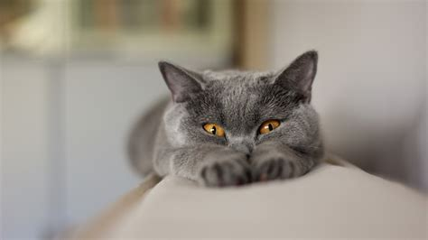 cats for me hd and cat wallpapers image host me