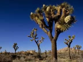 joshua tree national park national geographic