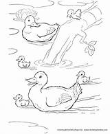 Duck Coloring Ducks Pages Farm Animal Pond Colouring Swimming Printable Animals Activity Schwimmen Enten Sheets Print Bauernhof Honkingdonkey Drawing Para sketch template