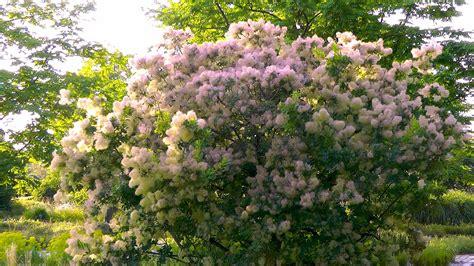 Straeucher Fuer Den Garten by Str 228 Ucher Garten Natur Gestalten Erleben Geniessen