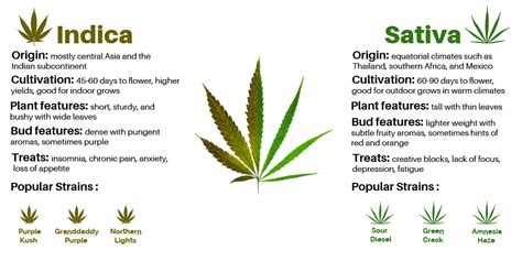 The Ultimate Guide On Indicas Vs. Sativas