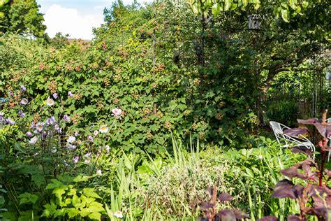 Pflanzen Sichtschutz Für Den Garten by Sichtschutz Ideen F 252 R Den Garten