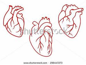 Set Human Hearts Stock Vector 337065431 - Shutterstock