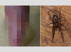 Black Widow Spider Homes 7