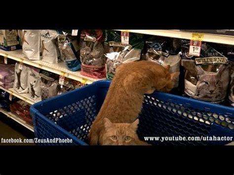 cats shopping  petsmart  leash youtube