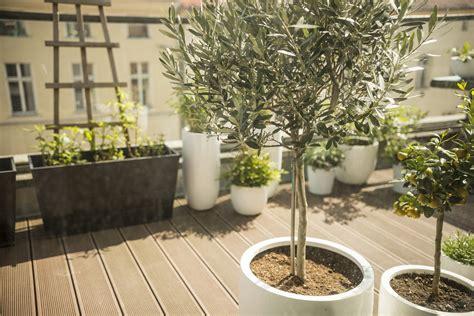 Baum Kübel Winterhart by Baum Im Topf 187 Sortenauswahl Pflegetipps Und Mehr
