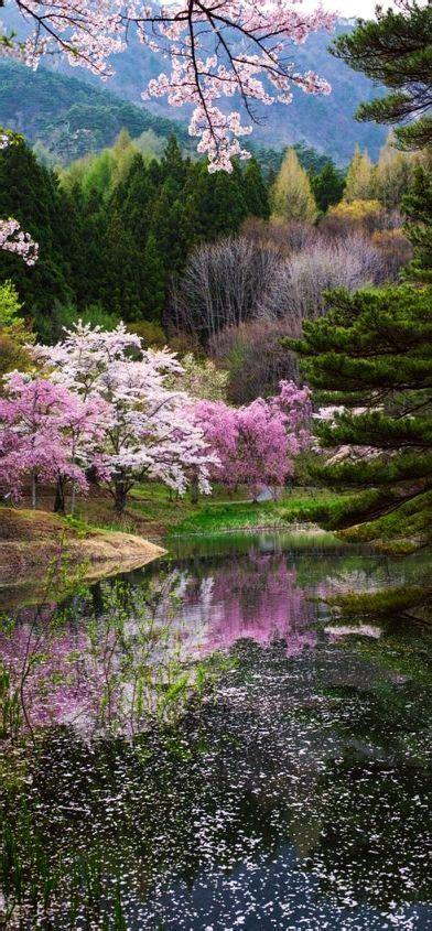 spring  japan photo  kazuhiro yashima flower