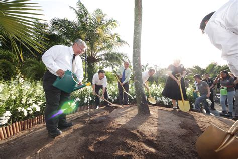 gardens by the bay ceo tree planted at gardens by the bay in honour of mr lee kuan yew the new paper
