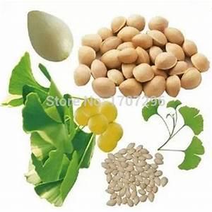 Ginkgo Samen Kaufen : online kaufen gro handel tee bl tter pflanze aus china tee ~ Lizthompson.info Haus und Dekorationen