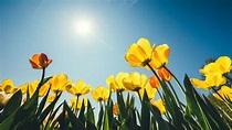 15 Scientific Reasons Spring Is the Most Delightful Season ...