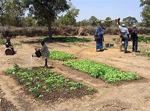 Innovative Farming Practices in Mali Lead to ...