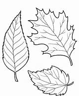 Leaves Coloring Fall Pages Printable sketch template