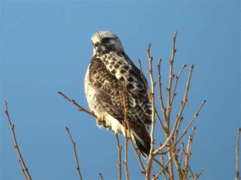 for raptors in winter few birding habitats in ohio are