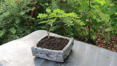 Le Aus Beton Selber Machen by Pflanzenschale Planting Bowl Aus Beton Selber Machen
