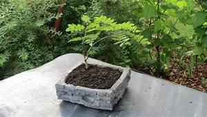 Pflanzkübel Beton Selber Machen : pflanzenschale planting bowl aus beton selber machen youtube ~ Orissabook.com Haus und Dekorationen