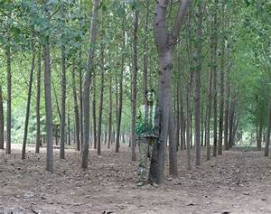 Hiding in the City no. 94: In the Woods by Liu Bolin on ...