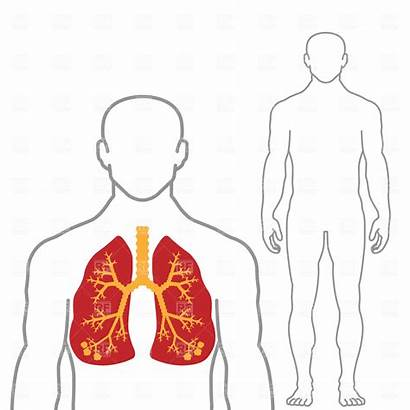 Human Clipart Outline Clip Lungs Vector Lung