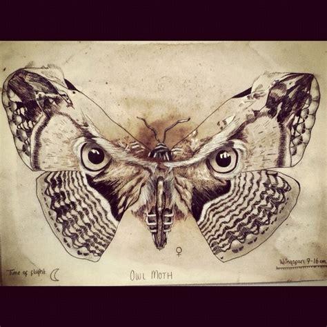 owl moth  pencil coffee owl moth drawing art