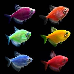 GloFish Tetra Sampler Pack | A well, Aquarium fish for ...
