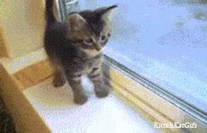 Kitten Lol GIF - Find & Share on GIPHY